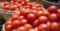 «Ла Томатина»: испанцы собрались на помидорную битву