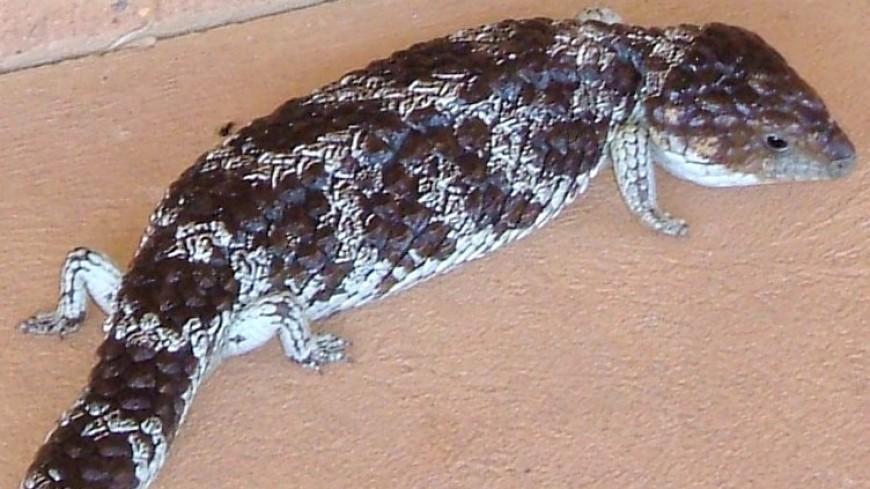 Клубок змей: в Австралии в посылках обнаружили десятки редких рептилий