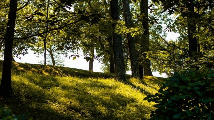 ВВенсенском лесу открылся первая встолице франции зона отдыха для нудистов