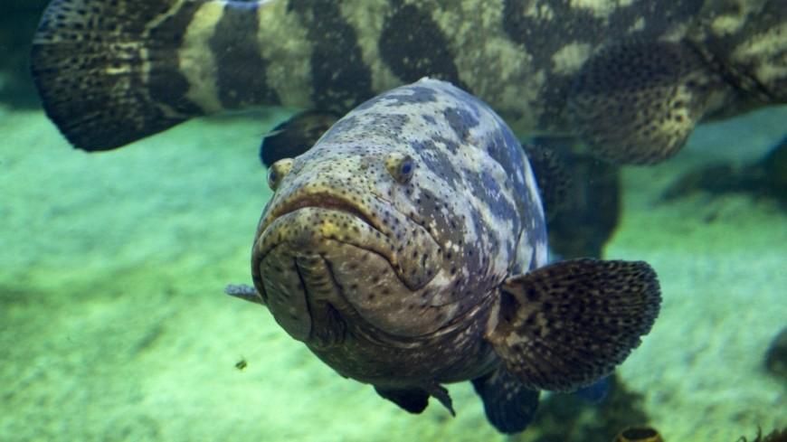 Ученые выяснили, почему рыба питается пластиком
