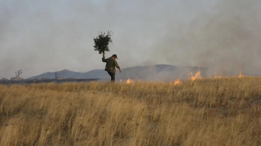 """Фото: Елизавета Шагалова, """"«МИР 24»"""":http://mir24.tv/, лесные пожары, лесной пожар"""
