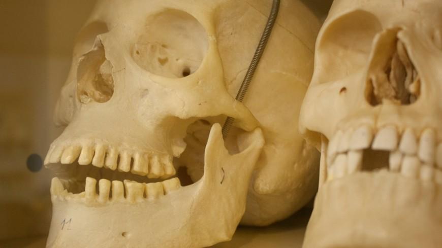 Рыболовы отыскали черепа икости наберегу Иртыша— кошмарный улов