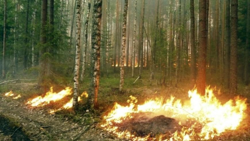 Пиренеи в огне: жертвами лесных пожаров стали 42 человека