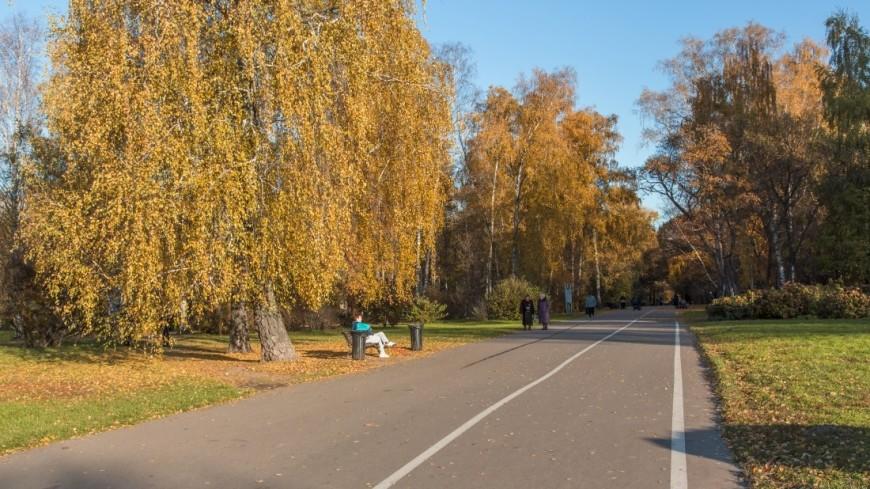 Москвичи могут рассчитывать на«бабье лето» впервой половине сентября