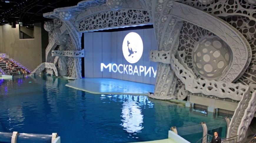 Водные шоу и русалка: «Москвариум» отметит день рождения