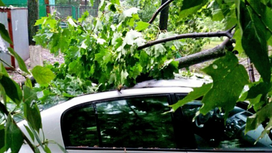 Ураган в Москве повалил 16 деревьев и повредил пять автомобилей