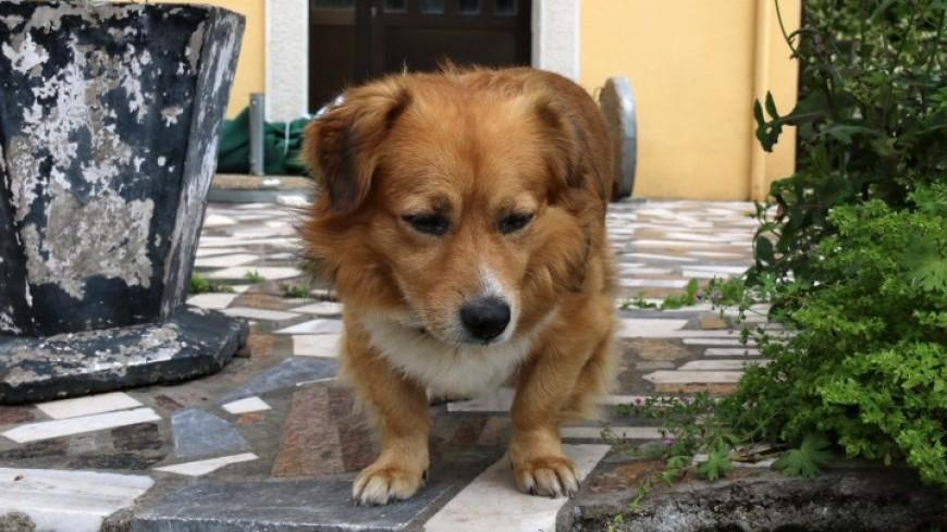 Служебных собак в Эквадоре под гимн проводили на пенсию