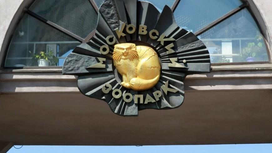 Один изкрупнейших инсектариев вевропейских странах появится вМосковском зоопарке
