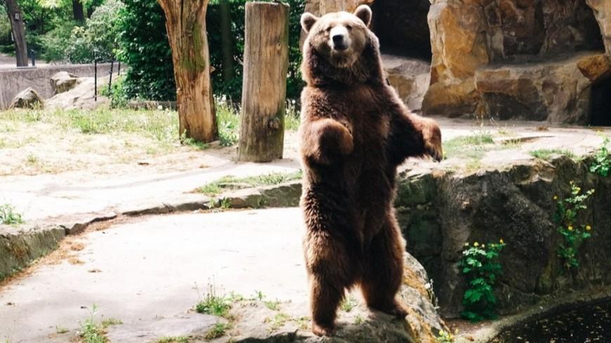 В Японии пенсионер-каратист сумел отразить нападение медведя