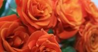 Назло зиме: в канун Нового года в Калифорнии снаряжают «флотилию роз»