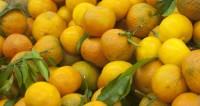 В Днепре из-за аварии дорогу усыпало мандаринами