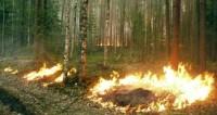 Правительство России запретило жечь траву и разводить костры у дорог