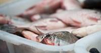 Город в Японии ввел режим ЧС из-за ядовитой рыбы в магазинах