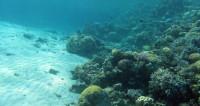 Морской слизень: ученые показали, как питается самая глубоководная рыба