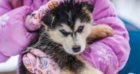Талисман Нового года: в Азербайджане скупают породистых щенков