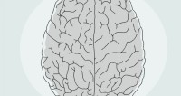 Ученые нашли объяснение работе мозга творческих людей