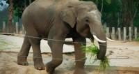 В индонезийском заповеднике родился детеныш редкого суматранского слона