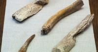 Палеонтологи усомнились в возрасте предков Homo sapiens