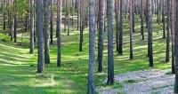 «Даже 300-летних елок не жалеют». Челюскинский лес раздора