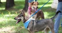 Накануне года Собаки в Омске выявят носителей «собачьих» фамилий