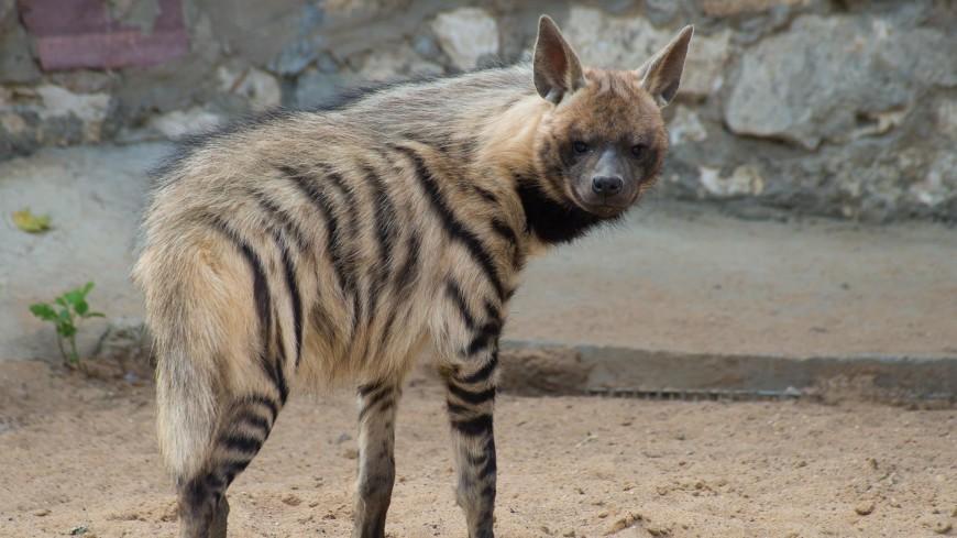Свыше десяти видов животных признали «спорными» для Красной книги