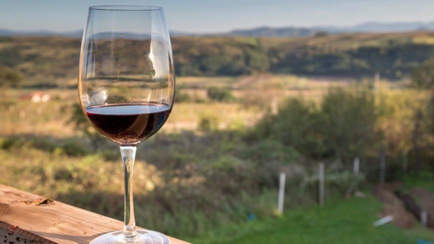 Как выбирать и где покупать дорогие вина
