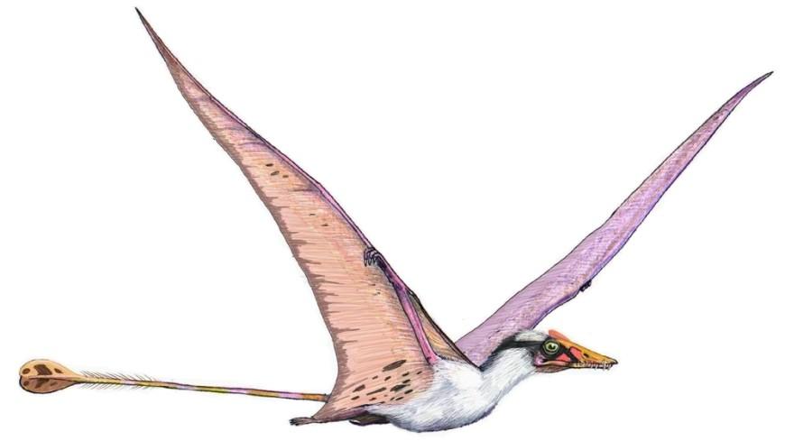 В Китае обнаружили 215 яиц птерозавров