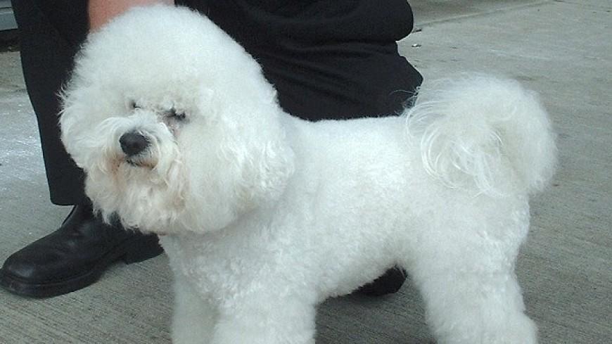 Объятия вместо дрессуры: ласковый пес умилил интернет