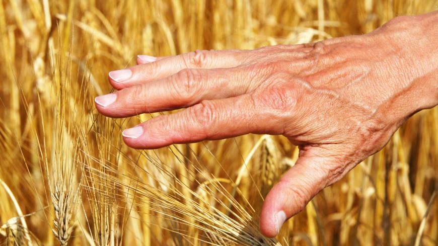 Татарстан получил рекордный за последние семь лет урожай зерна