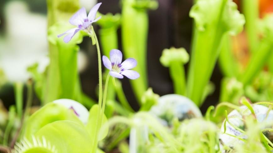 Ученые обнаружили в растениях источник бессмертия