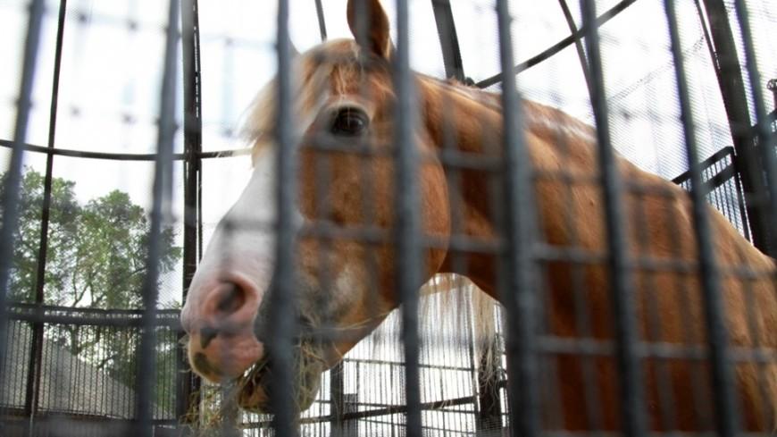Слепому британцу дадут в поводыри лошадь