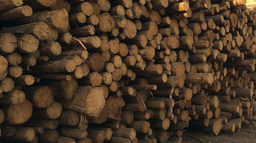 «Подари дрова»: волонтеры спасают пенсионеров от холода
