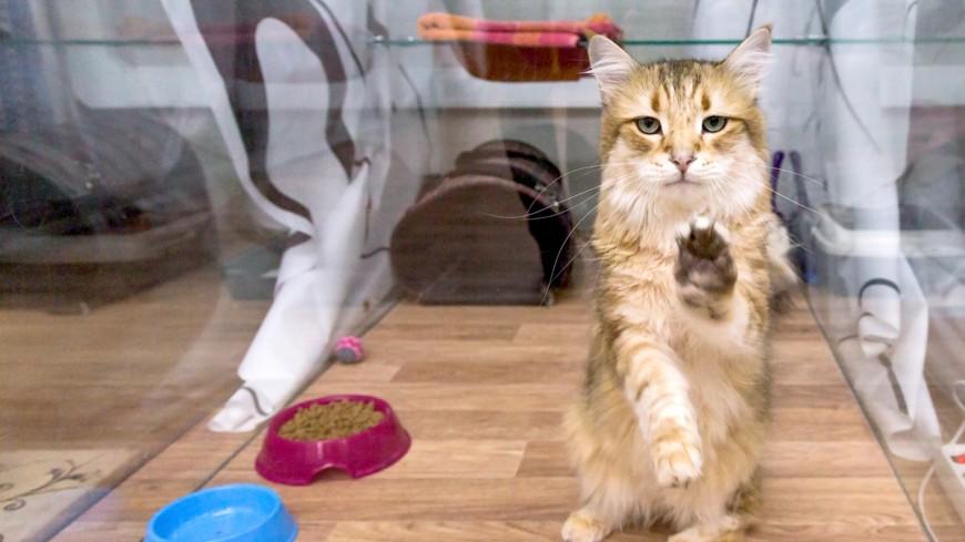 В Австралии открыли центр йоги с котами
