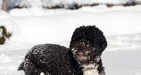 Американцы запаслись лопатами из-за снегопада