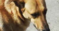 В США спасатели сняли собаку-альпиниста со скалы