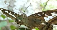 Сан-Диего ждет гостей на выставке тропических бабочек