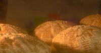 Хлеб по старинным рецептам может приносить прибыль