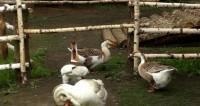 Жителей четырех сел Крыма эвакуируют из-за угрозы подтопления