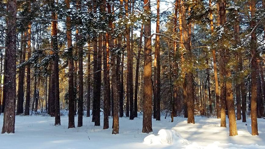 Снежная зима угрожает паводком 500 городам Сибири