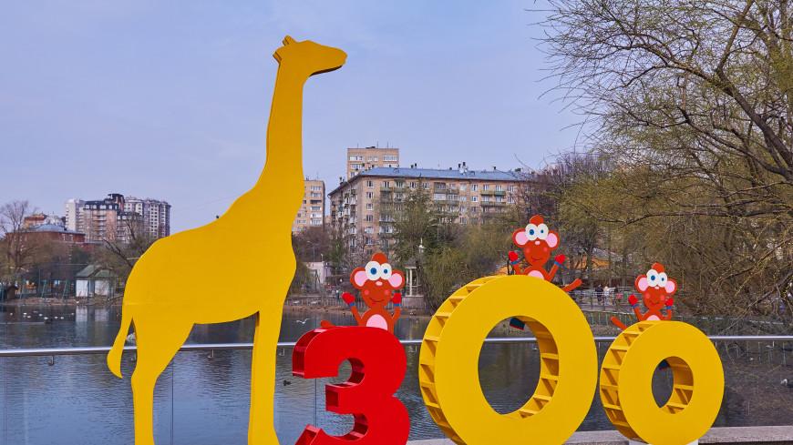 Московский зоопарк отметил день рождения квестами и лекциями