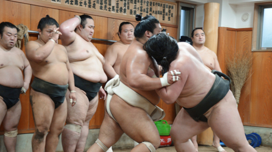 Мужское сумо порно