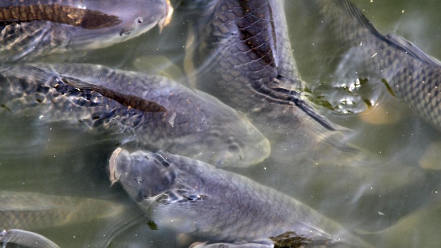В молдавском селе Опачь на затопленных лугах ловят рыбу