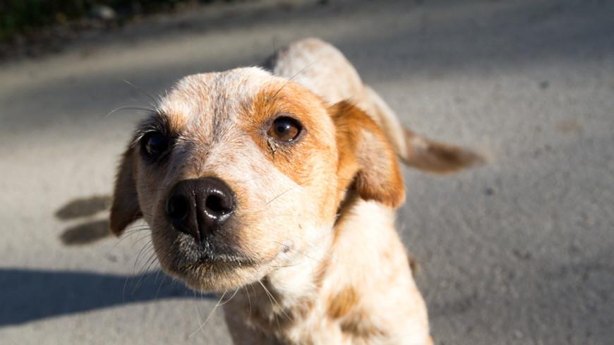 Ученые: из всех животных только собаки умеют сопереживать людям