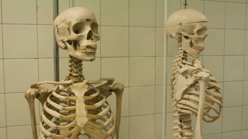 Ученые: оседлость сделала скелет человека легче