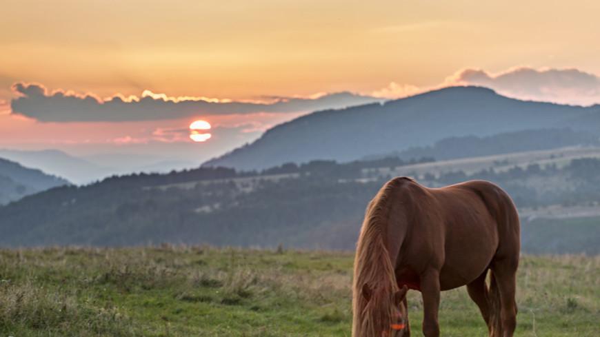 Как тренируют лошадей для конного поло