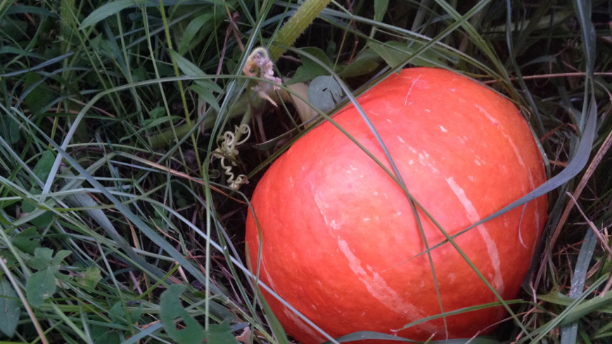 В США накануне Хэллоуина померились тыквами