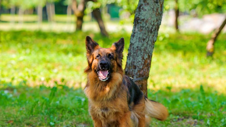 Собаки различают слова и интонацию