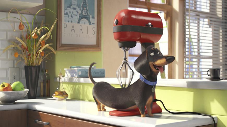 Тайная жизнь домашних животных» и 9 других отличных мультфильмов