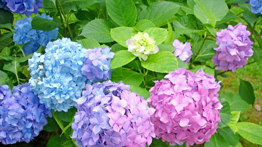 Жители Австрии будут выращивать цветы в прахе родственников