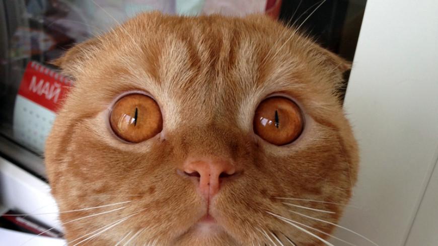 Ученые создали специальную кошачью музыку на основе мяуканья